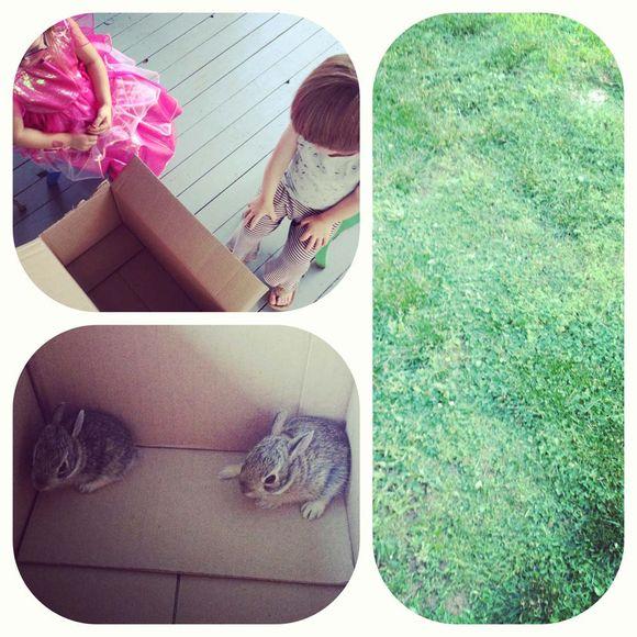 June babysitting bunnies