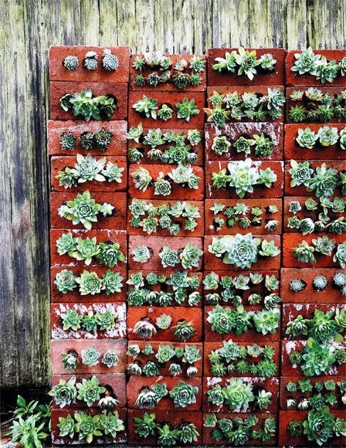 Bricks and succulents 1