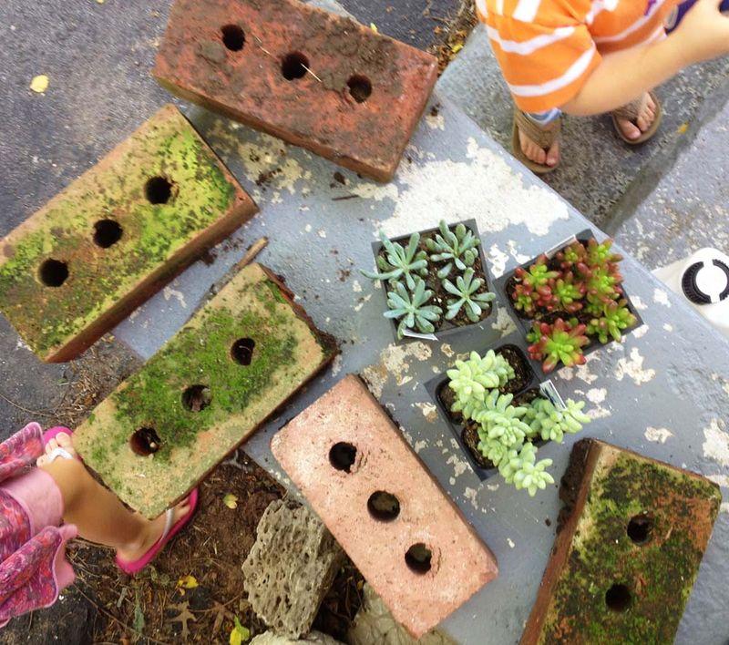 June bricks and succulents